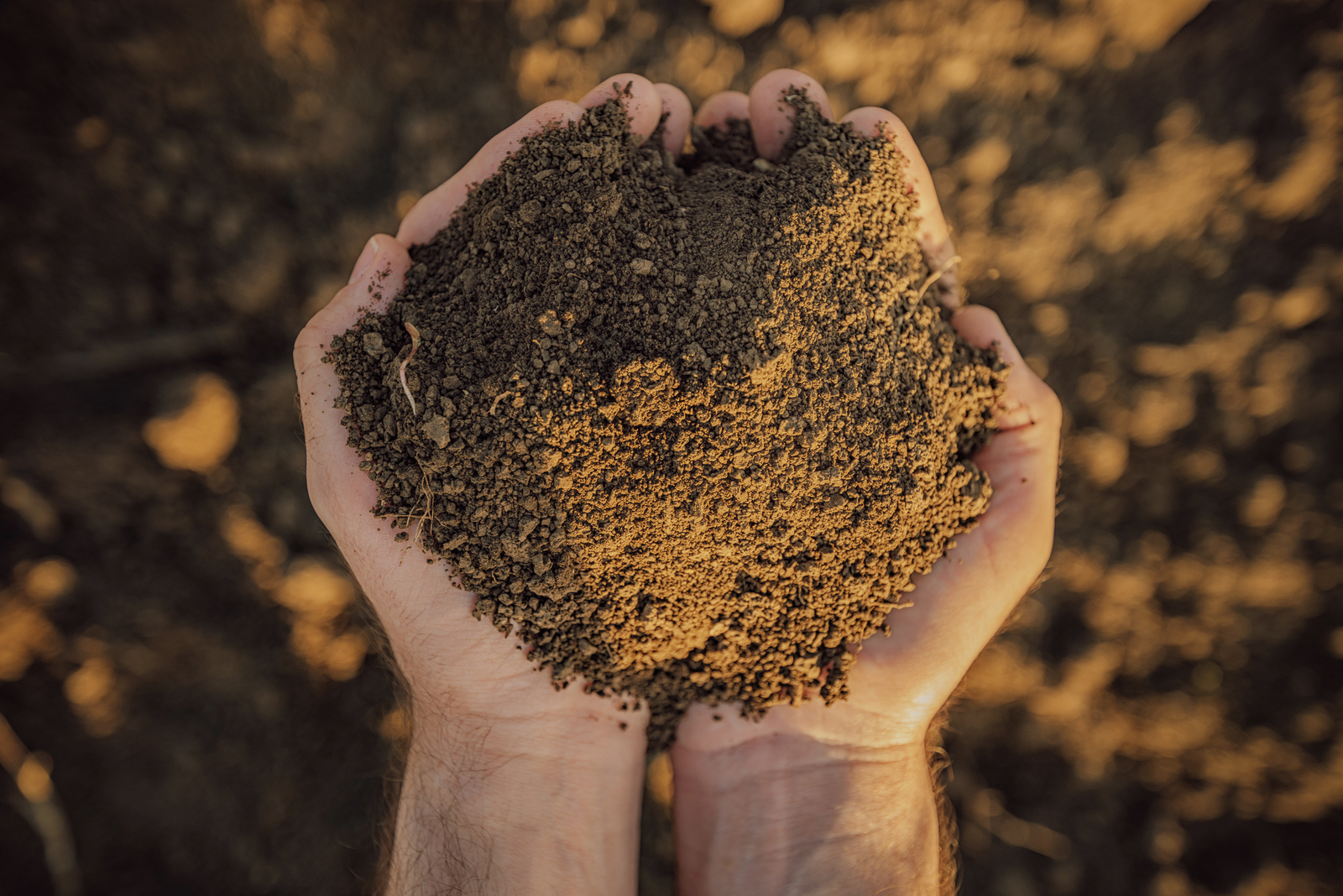 Nutrient Management Helps Your Soil Thrive