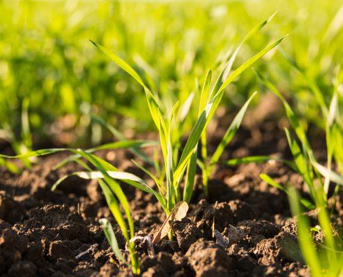 Comprehensive Crop Management Produces Thriving Crops