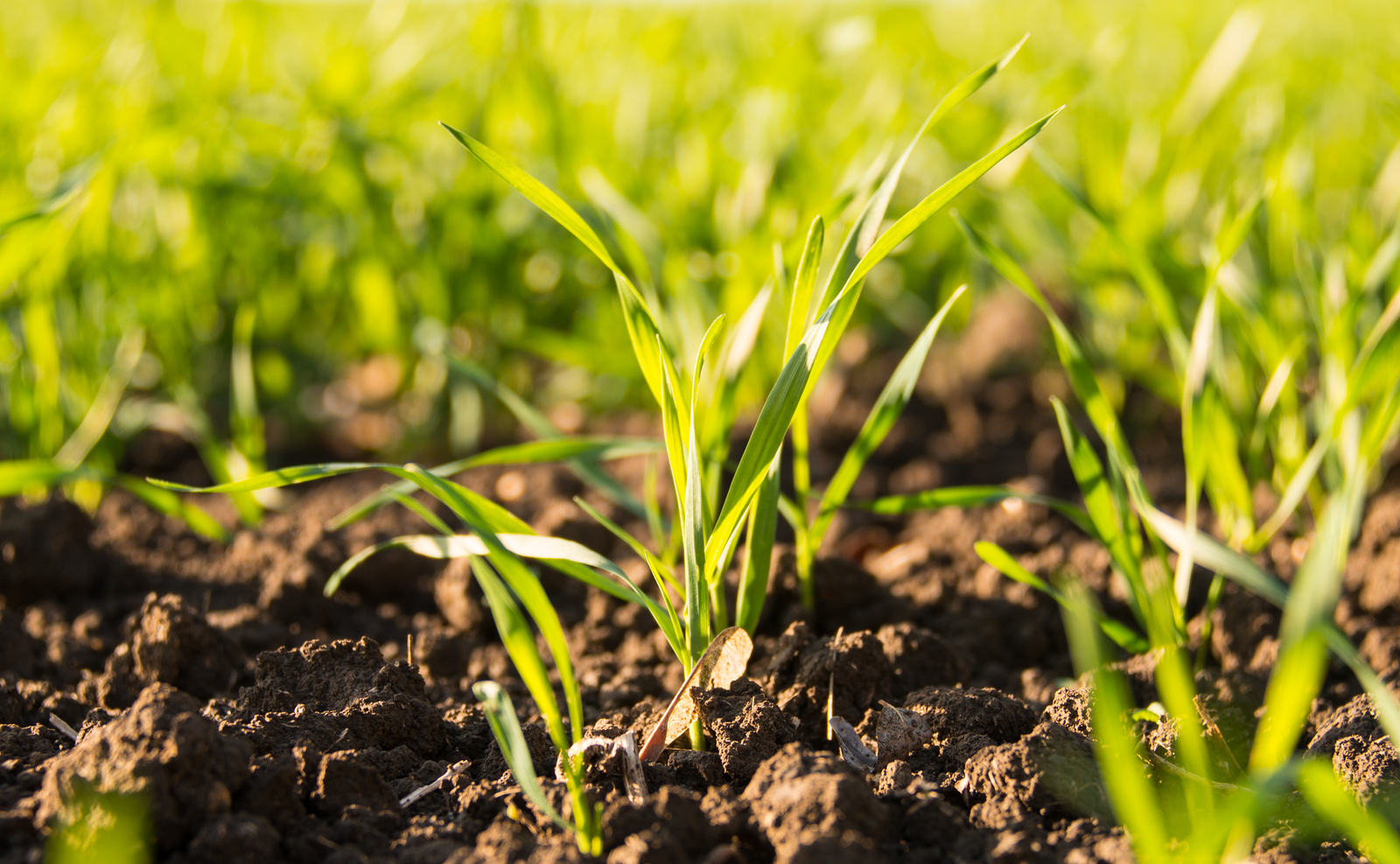 GIS Maps Your Fields So You Can Grow Crops Effectively